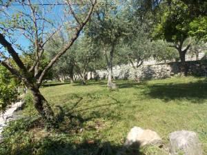 DSCN3933 300x225 - Kratka crtica o vrtu iznad franjevačkog samostana u Cavtatu