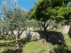 DSCN3935 300x225 - Kratka crtica o vrtu iznad franjevačkog samostana u Cavtatu