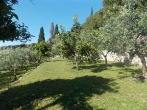 DSCN3936 300x225 - Kratka crtica o vrtu iznad franjevačkog samostana u Cavtatu