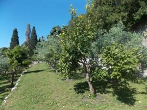 DSCN3937 300x225 - Kratka crtica o vrtu iznad franjevačkog samostana u Cavtatu