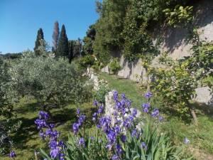 DSCN3938 300x225 - Kratka crtica o vrtu iznad franjevačkog samostana u Cavtatu