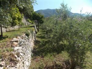 DSCN3945 300x225 - Kratka crtica o vrtu iznad franjevačkog samostana u Cavtatu