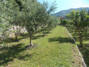 DSCN3946 300x225 - Kratka crtica o vrtu iznad franjevačkog samostana u Cavtatu