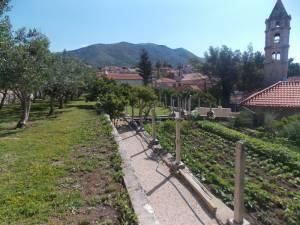 DSCN3948 300x225 - Kratka crtica o vrtu iznad franjevačkog samostana u Cavtatu