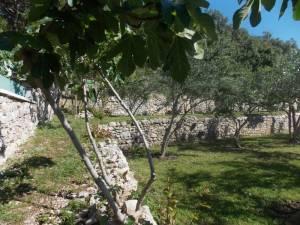 DSCN3951 300x225 - Kratka crtica o vrtu iznad franjevačkog samostana u Cavtatu