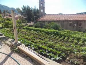 DSCN3956 300x225 - Kratka crtica o vrtu iznad franjevačkog samostana u Cavtatu