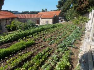 DSCN3957 300x225 - Kratka crtica o vrtu iznad franjevačkog samostana u Cavtatu