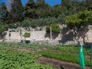 DSCN3965 300x225 - Kratka crtica o vrtu iznad franjevačkog samostana u Cavtatu
